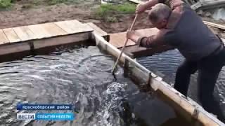 Фермер из Красноборского района разводит осетровые породы рыб