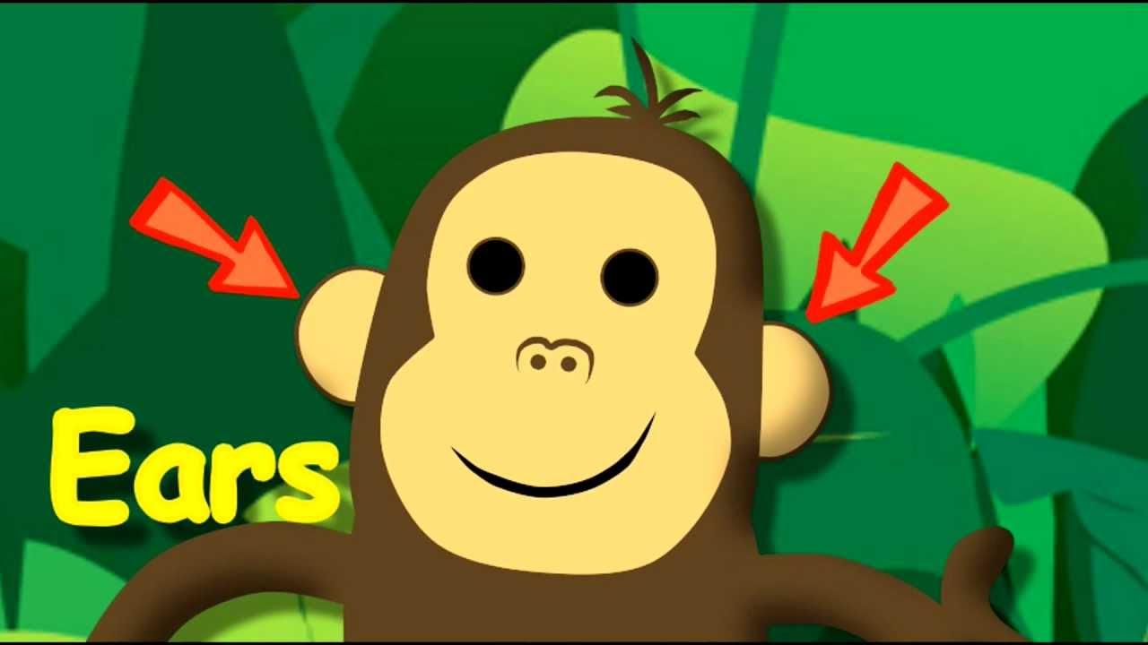 Monkey Face. Partes de la cara en ingles
