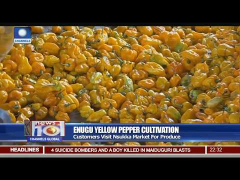 Nsukka Farmers Produce Special Yellow Pepper