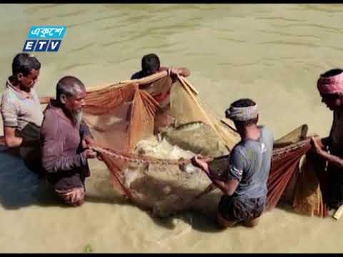 বিপন্ন প্রজাতির মাছ চাষ করছেন উচ্চশিক্ষিত এই যুবক | ETV News