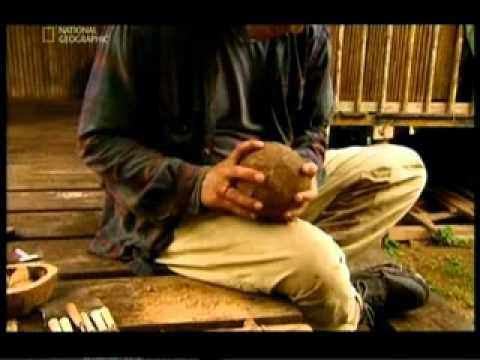 Лечение аденомы простаты кедровым орехом