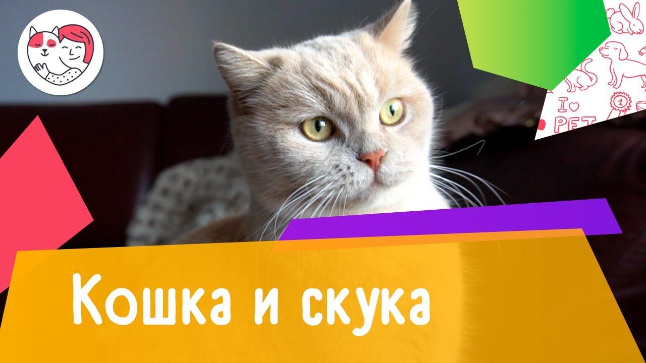 Как понять, что вашей кошке скучно: 5 признаков