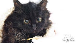 LIVE: Pregnant sister feral cats + kittens - TinyKittens.com