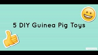 5 DIY Guinea Pig Toys