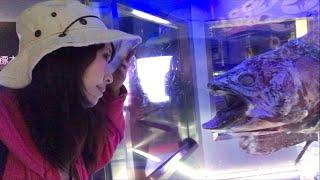 日本一周女ひとり旅91日目。静岡県沼津で深海魚を食べるLive。JapanTravel.