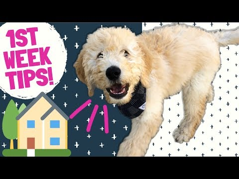 Bringing Puppy Home Tips! 🏠 Food, Training & Care For New Dog