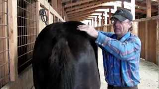 How to fix a lame horse