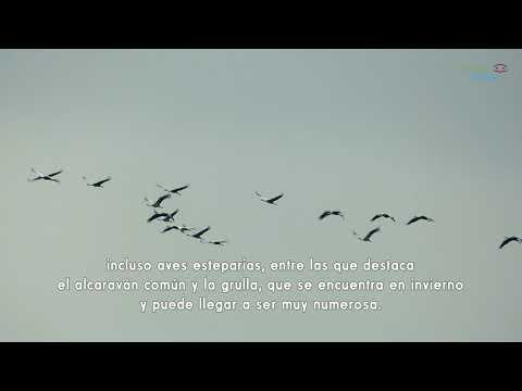 Birding Málaga. Ver aves en la laguna de Fuente de Piedra