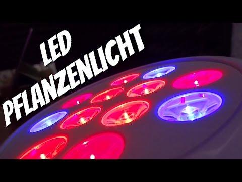 Für die kleinen grünen Freunde - LED Pflanzenlicht von 1byone im Review Test