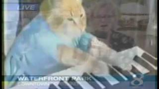 A Funny kid saying ''I Like Turtles and then a amazing cat on the keyboard!