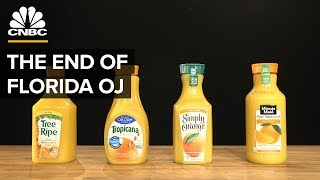 Why Most Orange Juice Comes From Brazil, Not Florida
