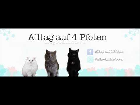 DIY Fensterliege für Katzen // DIY window bed // Do it yourself for cats
