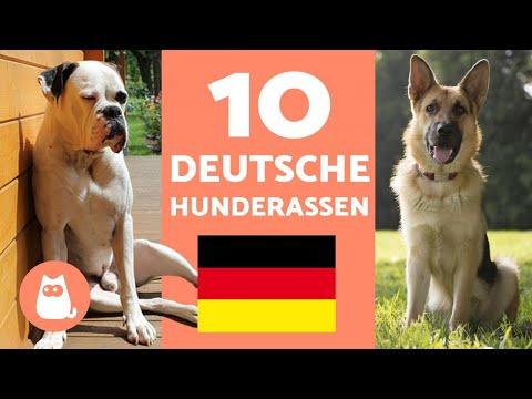 Die 10 beliebtesten DEUTSCHEN HUNDERASSEN - Hunde deutscher Herkunft