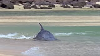 Hydroplaning Dolphins   Planet Earth   BBC Studios