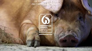 """Bienestar animal"", de Shernan Creative Colletctive para Eroski Trailer"
