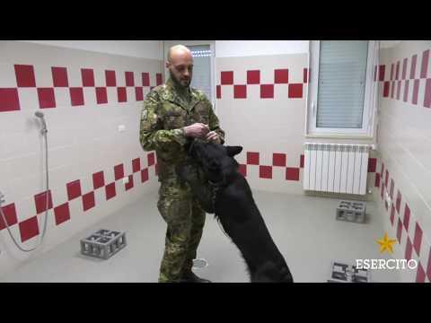 Video lezioni libere massaggio prostatico