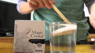 マジッククリスタル白成長記録