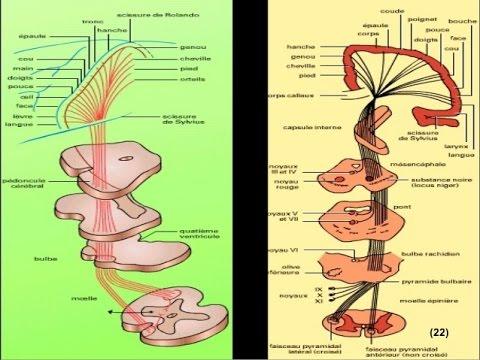 Ce este cervicita condilom