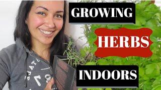 GROW HERBS INDOORS  INDOOR HERB GARDEN HOW TO GUIDE