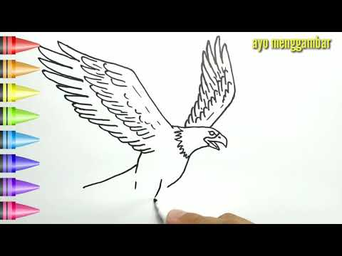 Unduh 980+ Foto Gambar Burung Elang Untuk Mewarnai HD Paling Unik Gratis