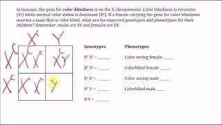 Color Blindness: X-linked Trait