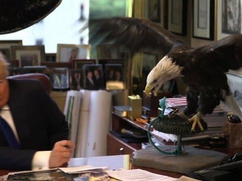 Raw: Bald Eagle Attacks Trump During Photoshoot