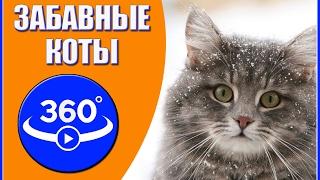 Забавные коты. Видео 360 градусов.