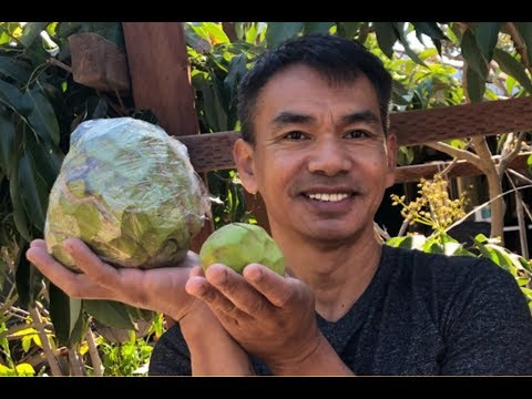 ផ្លែឈើនៅផ្ទះបងGeneral      Bong General Garden  (Tropical Fruits)