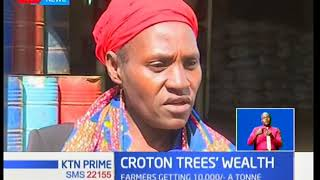 A company in Laikipia has found a way get wealth from Croton trees