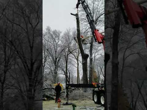 Video: Trees come down at Spring Lake Township Cemetery