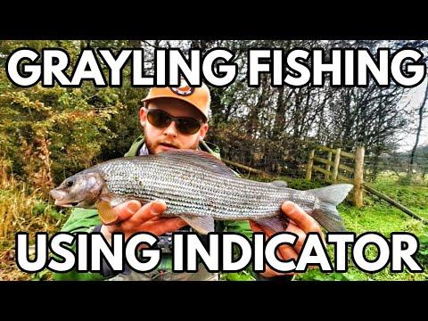 Fiskeri efter stalling med flue