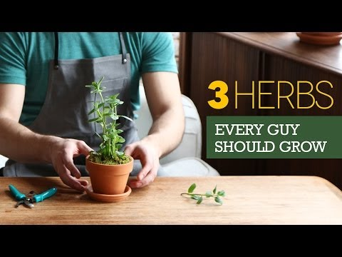 Grow Your Own Indoor Herb Garden The 3 herbs every man should grow on his windowsill workwithnaturefo
