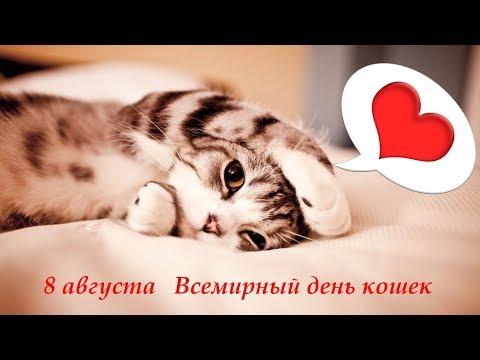 8 августа   Всемирный день кошек Поздравление онлайн видео