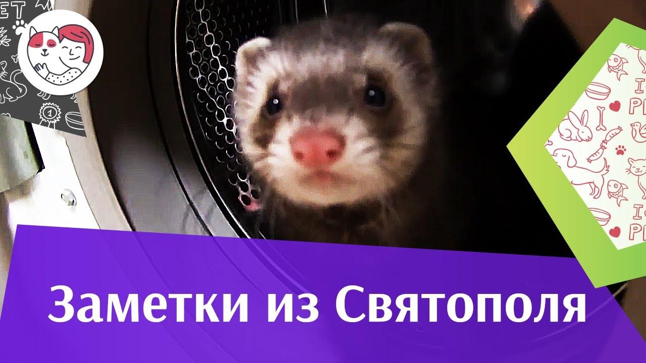 ЗАМЕТКИ ИЗ СВЯТОПОЛЯ выпуск 8  на ilikepet