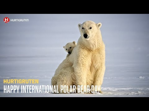 Hurtigruten - Happy Polar Bear Day!