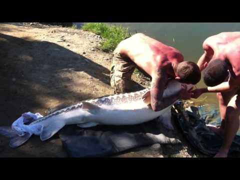 La pesca per guadagnare