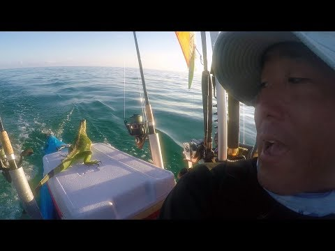 Saving An Iguana Four Miles Offshore