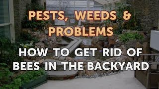 How to Get Rid of Bees in the Backyard