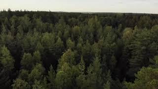 Forest Drone 4k (DJI Phantom test) #4