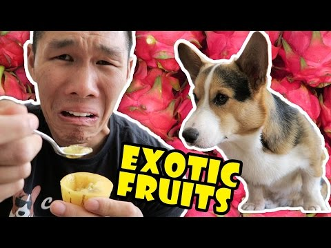 COMPARING EXOTIC FRUITS From Around the WORLD - Life After College: Ep. 503