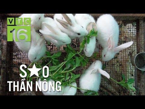 Đưa thỏ xuất ngoại, nông dân Bắc Giang thành triệu phú   VTC16