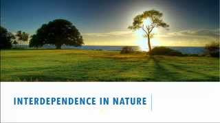 Interdependence In Nature -  5th Standard, Science, CBSE