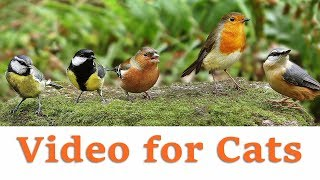 Videos for Cats to Watch - November Birds Extravaganza
