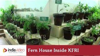 Fern House inside KFRI, Nilambur