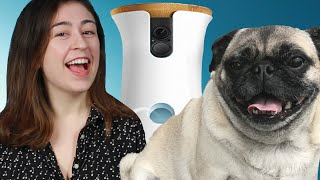 People Spied On Their Dogs With A Camera For A Day | Kholo.pk