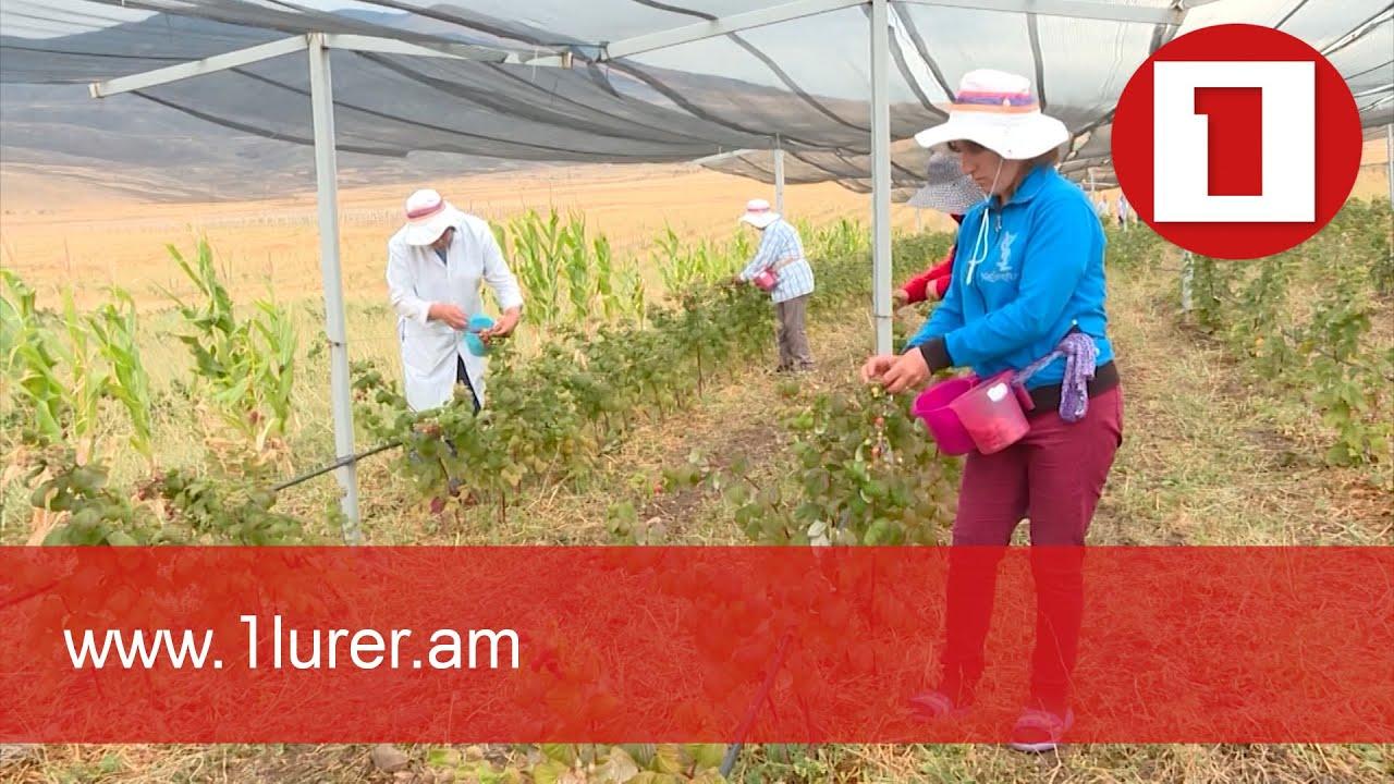 Ինտենսիվ այգեգործության զարգացմանն ուղղված ծրագիրը կմեկնարկի 2022 թվականից