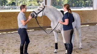 """Step TWO: """"Teaching Your Horse Piaffe In Hand"""" // Horse Training Tips With Deanna Corby Dressage"""