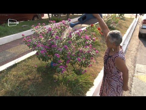 Atitude: Senhora fez jardim em canteiro de avenida são-caetanense