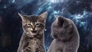 Котик - Мяу мяу мяу , Мур мур мур