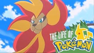 Pyroar  - (Pokémon) - The Life of Pokemon: Litleo & Pyroar